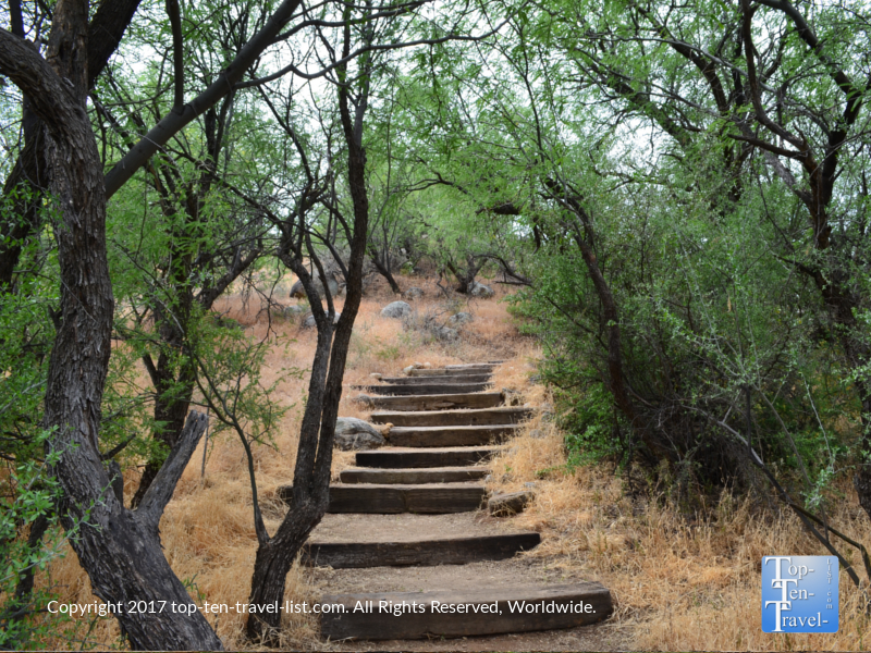 View of the birding trail at Catalina State Park in Tucson