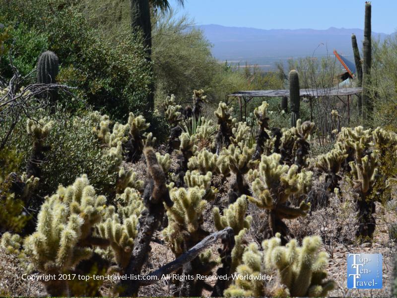 Beautiful cactus garden at the Arizona Sonoran Museum in Tucson