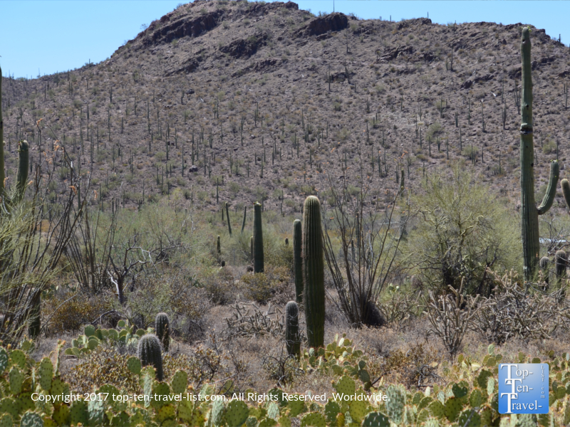 Lots of pretty cacti at the Arizona Sonoran Museum in Tucson