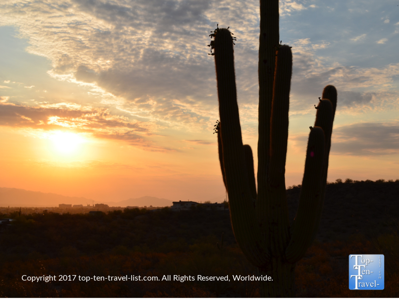 Saguaro at sunrise on Tumanoc Hill in Tucson