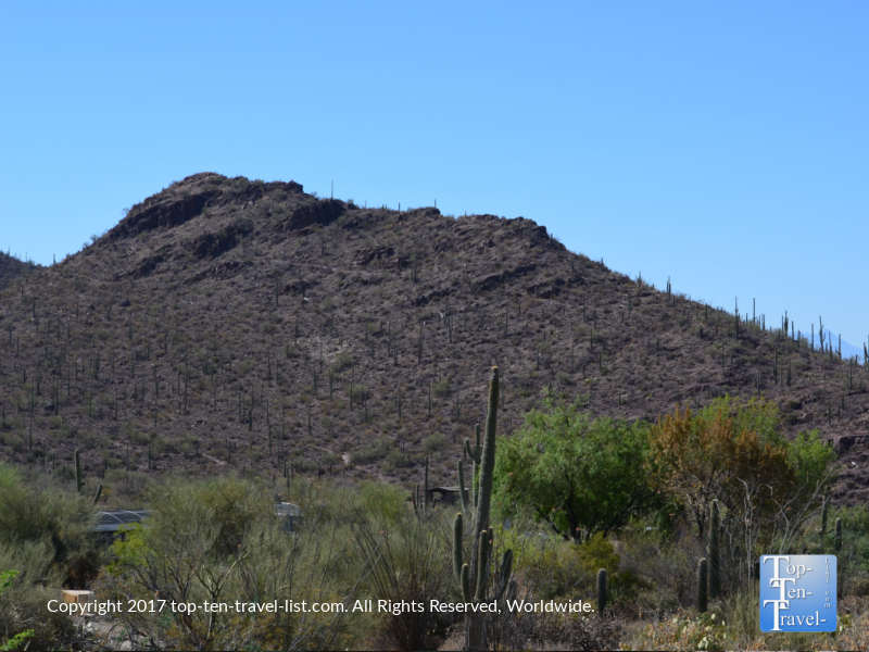 Scenic views from the Desert Loop trail at the Desert Sonoran Museum in Tucson
