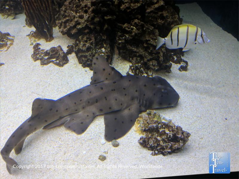 Shark at the Arizona Sonoran Desert Museum
