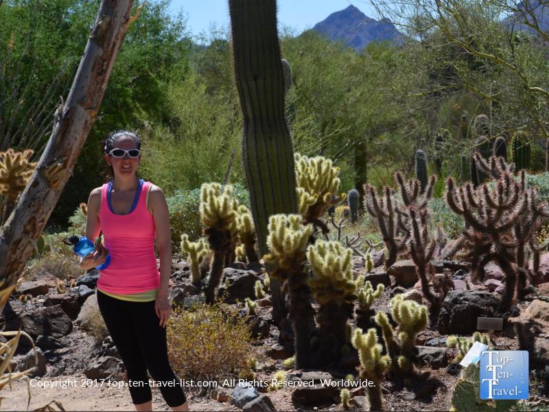 Cacti at Arizona Desert Sonoran Museum in Tucson
