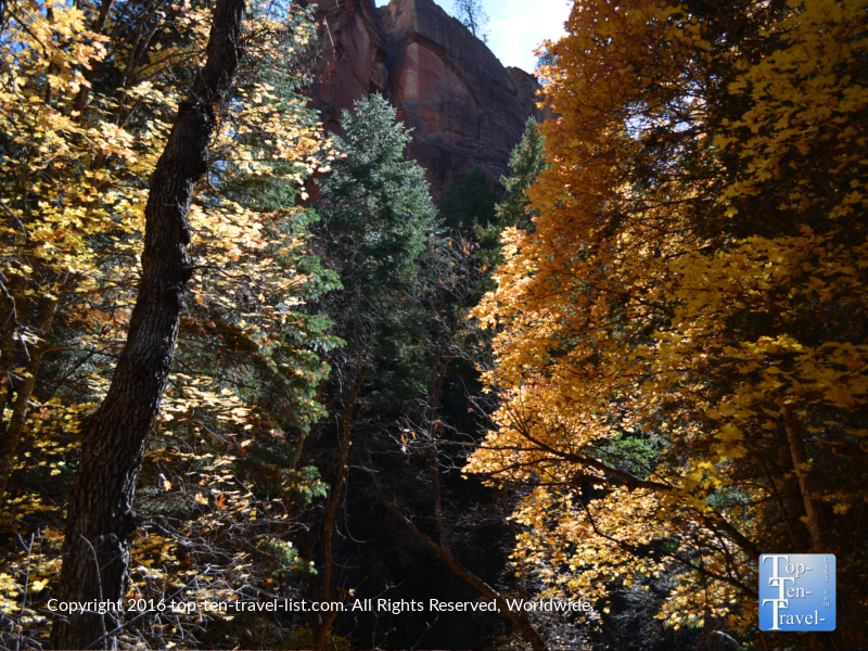 Bright foliage and red rocks on the West Fork Trail in Oak Creek Canyon