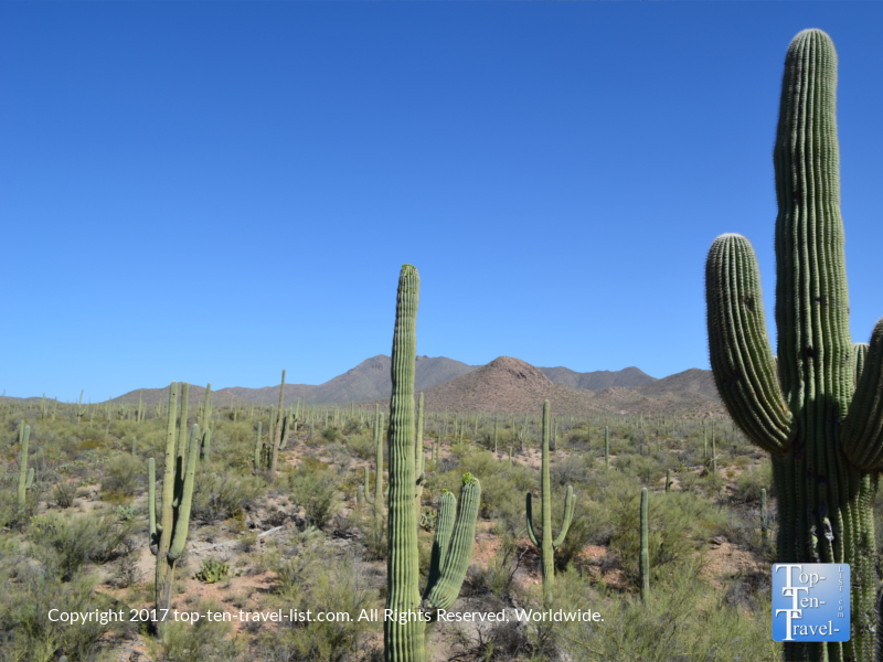 Gorgeous mountain and cacti views at Saguaro National Park in Tucson AZ