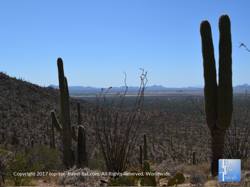 Great scenery at Saguaro National Park in Tucson AZ