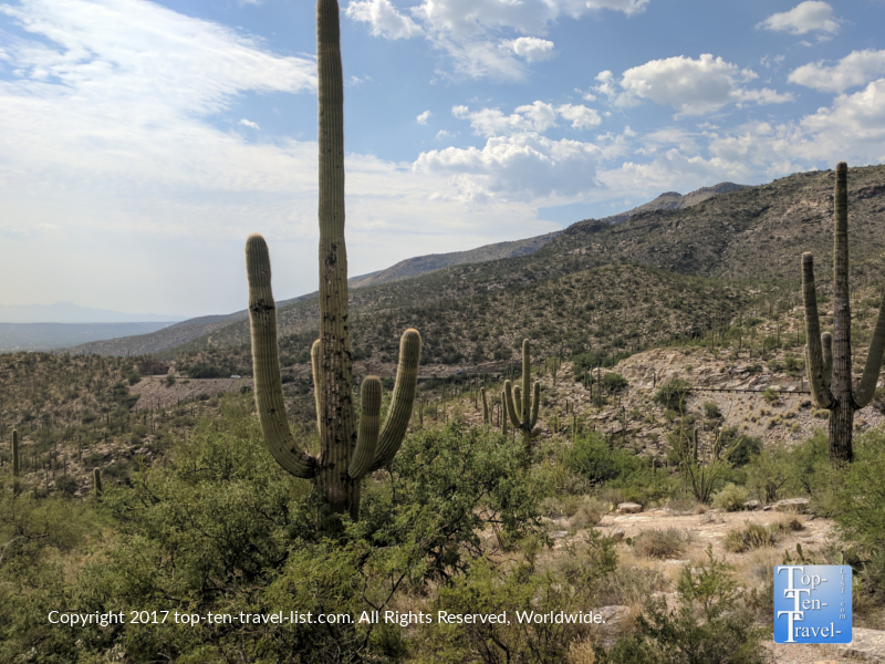 Views of the Saguaro cacti from the Mt Lemmon Scenic Byway