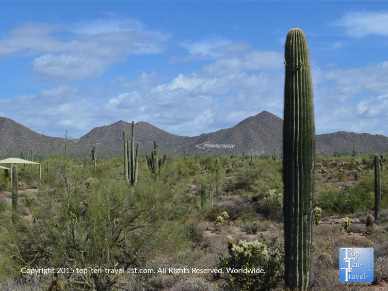 Hiking at Usery Mountain in Mesa, Arizona