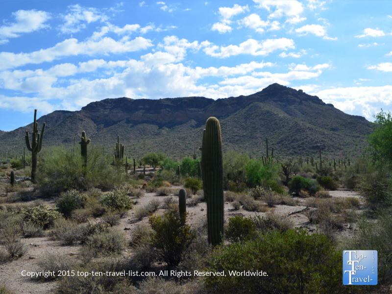 Beautiful Usery Mountain Park in Mesa, Arizona