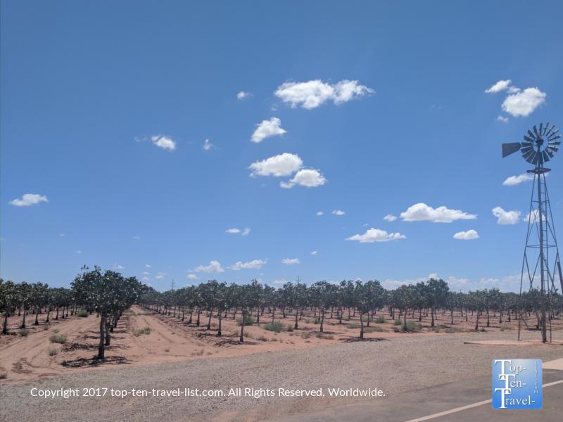 Pistachioland in New Mexico