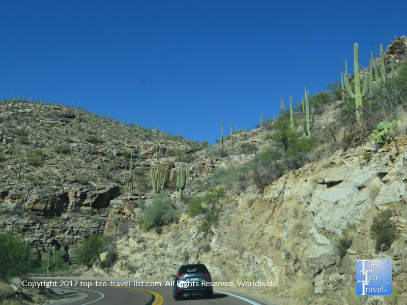 Lots of Saguaro cactus on the Mount Lemmon Scenic Byway