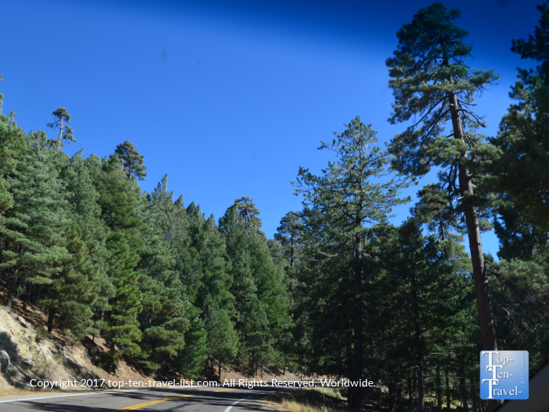 Pine tree scenery on the Mt Lemmon Scenic Byway near Tucson