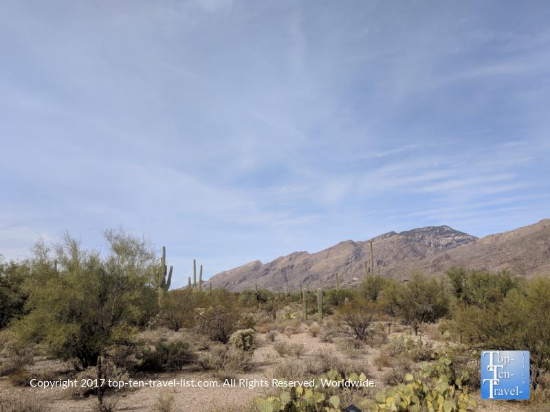 Pretty desert scenery along the nature trail at Sabino Canyon in Tucson, Arizona