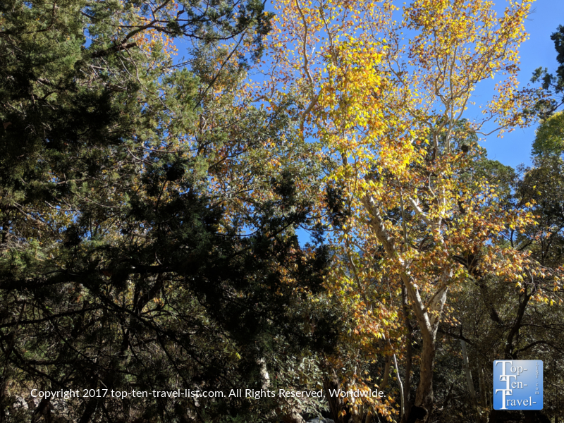Fall foliage at Madera Canyon in Arizona