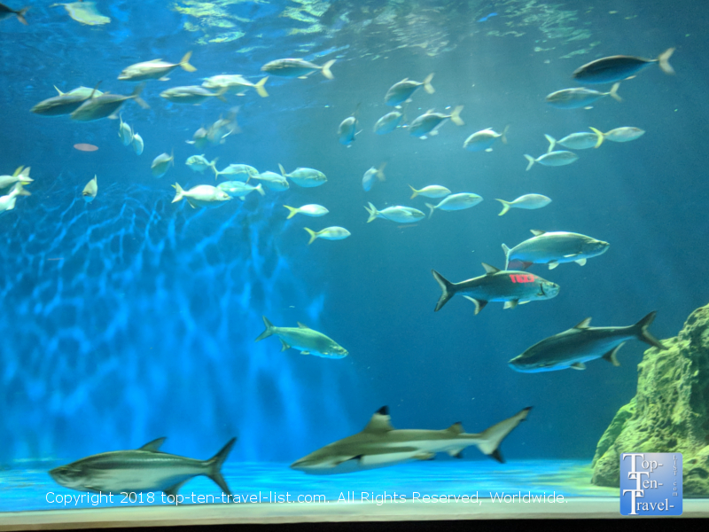 OdySea Aquarium in Scottsdale, Arizona