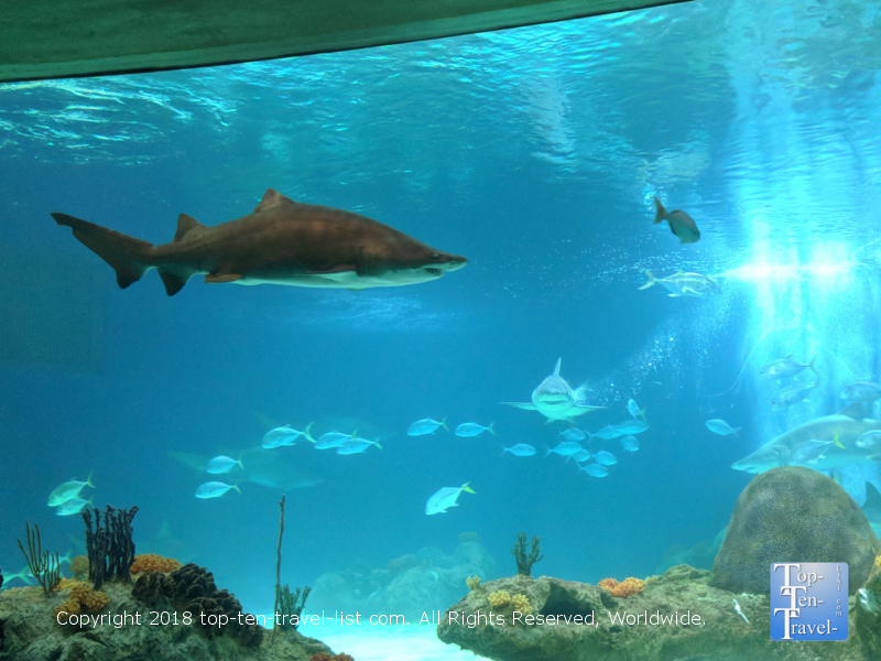 Sharks at the OdySea Aquarium in Scottsdale, Arizona