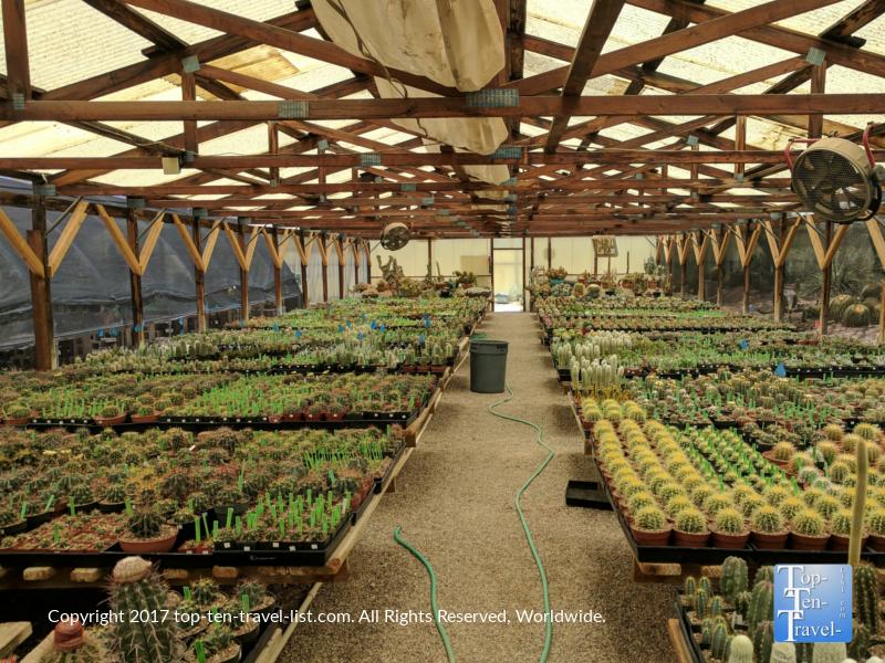 B and B Cactus Farm in Tucson, Arizona