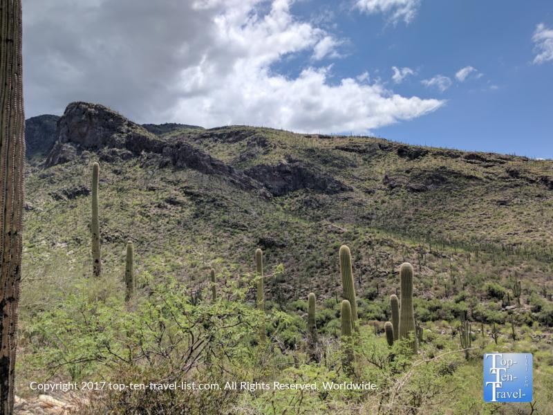 Gorgeous desert scenery from the Pima Canyon trail in Tucson, Arizona