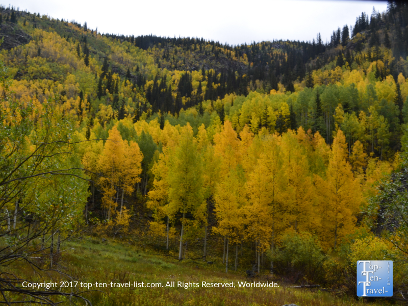Stunning fall foliage along the Durango & Silverton Narrow Gauge Railroad