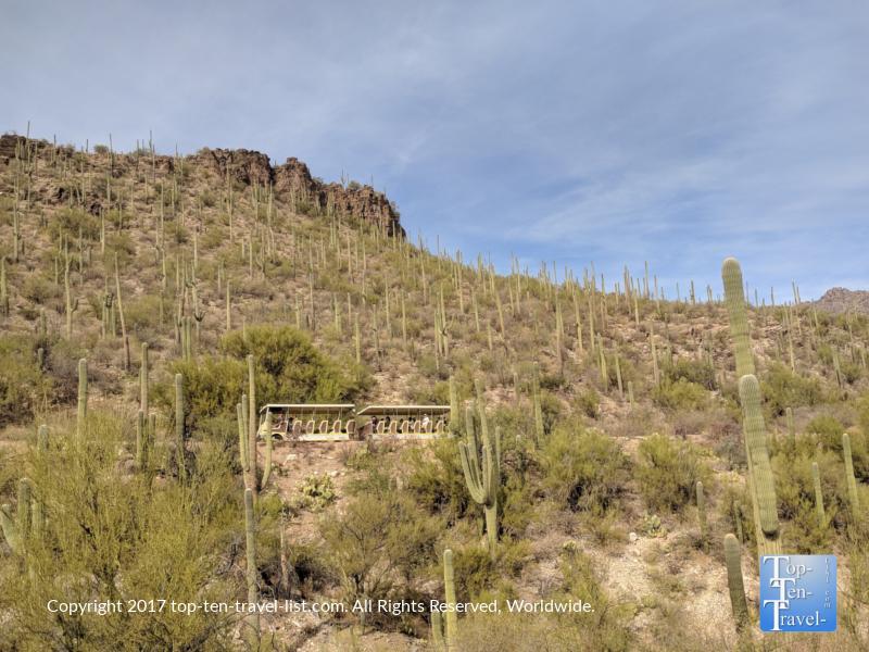 Tram tour at Sabino Canyon in Tucson, Arizona