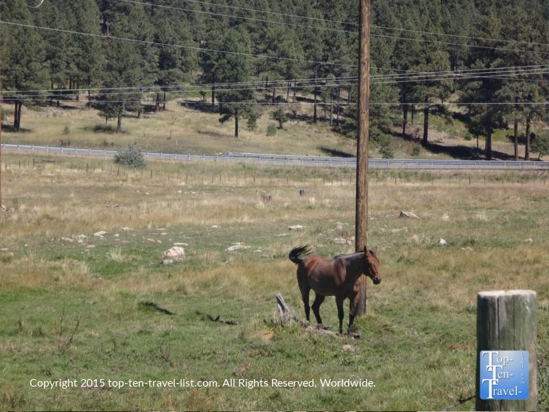 Diamond Hitch Stables in Pagosa Springs, Colorado
