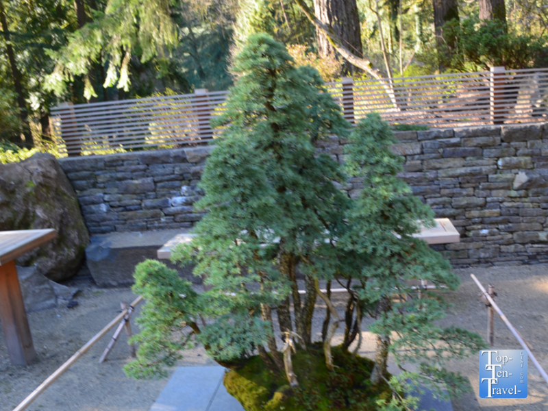 Bonsai terrace at the Portland Japanese Garden