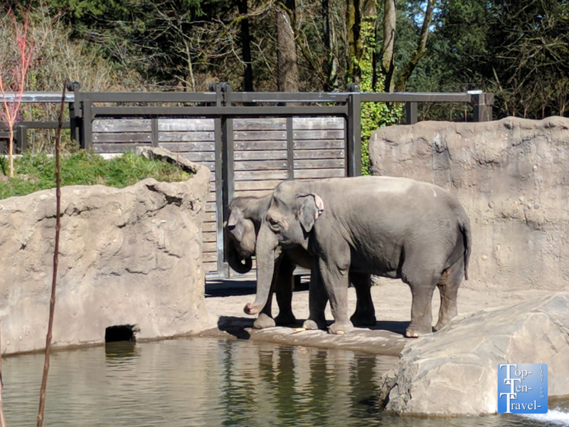Elephant at the Oregon Zoo in Portland, Oregon