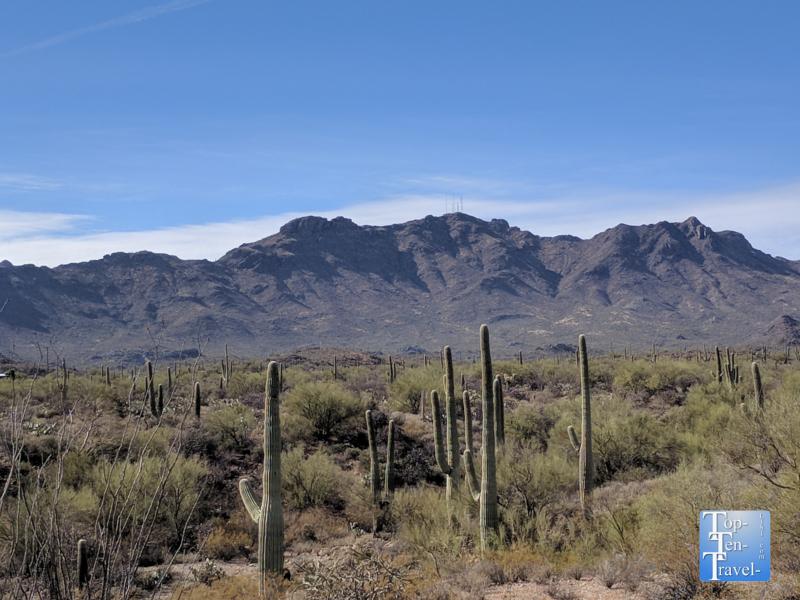 Sweetwater Preserve in Tucson, Arizona