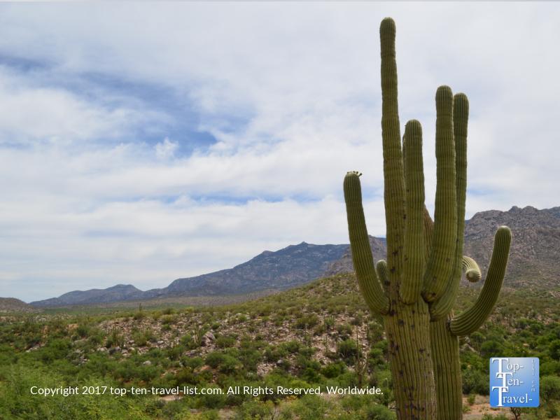 Beautiful Saguaro cactus at Catalina State Park in Tucson, Arizona