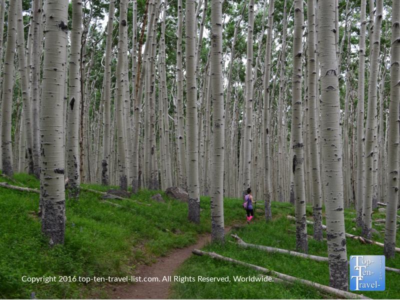 The beautiful Inner Basin trail in Flagstaff, Arizona