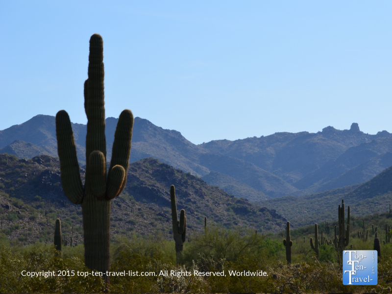 Saguaro cacti and mountain views at Scottsdale McDowell Preserve