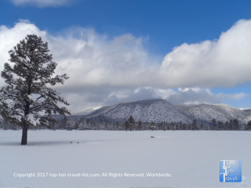 Beautiful scenery after a winter storm at Buffalo Park in Flagstaff, Arizona