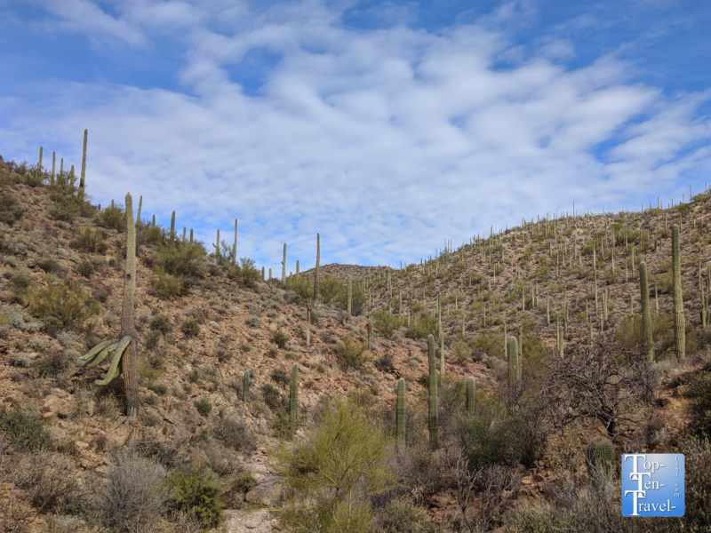 Views of the gorgeous cacti from the Hidden Canyon Bowen loop trail in Tucson, Arizona