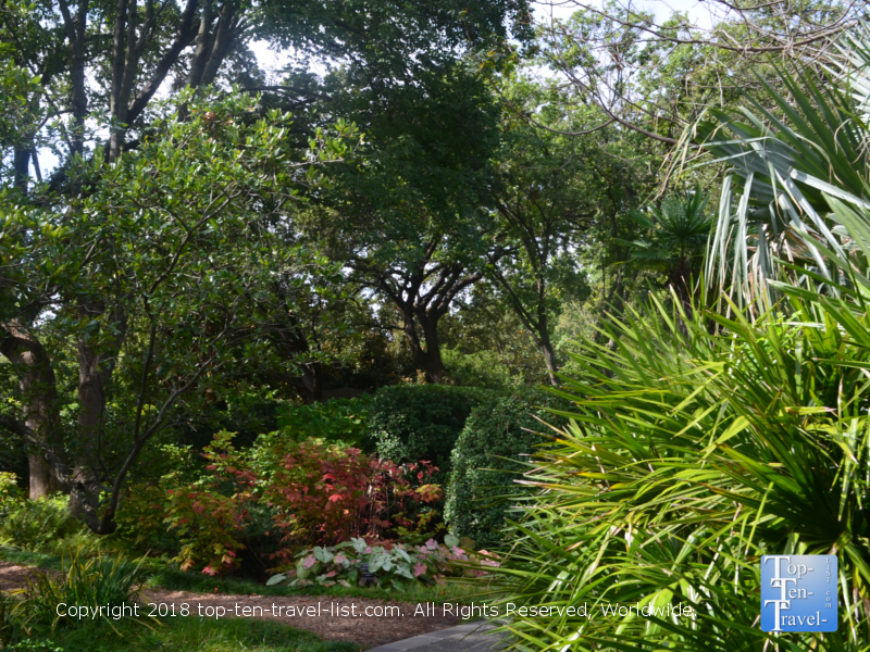 The Hardy Palm and Tropical Collection at the Dallas Arboretum