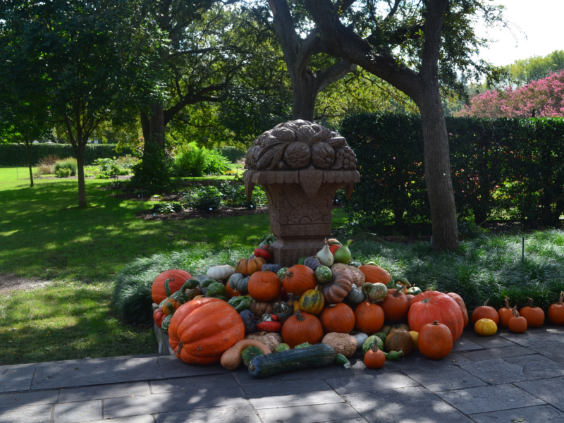 Gorgeous fall decor at the Dallas Arboretum