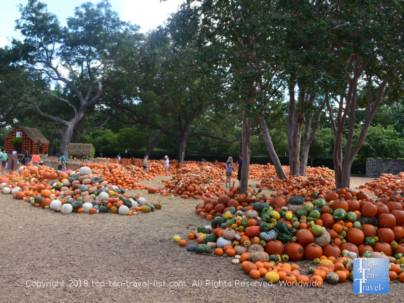 Over 90000 pumpkins at Pumpkin Village at the Dallas Arboretum