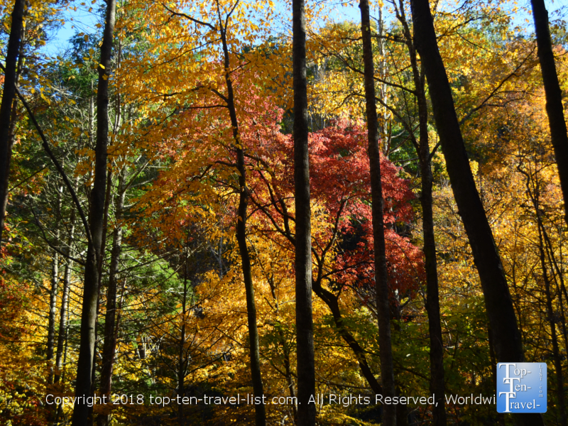 Bright foliage along the Catawba Falls trailhead in North Carolina