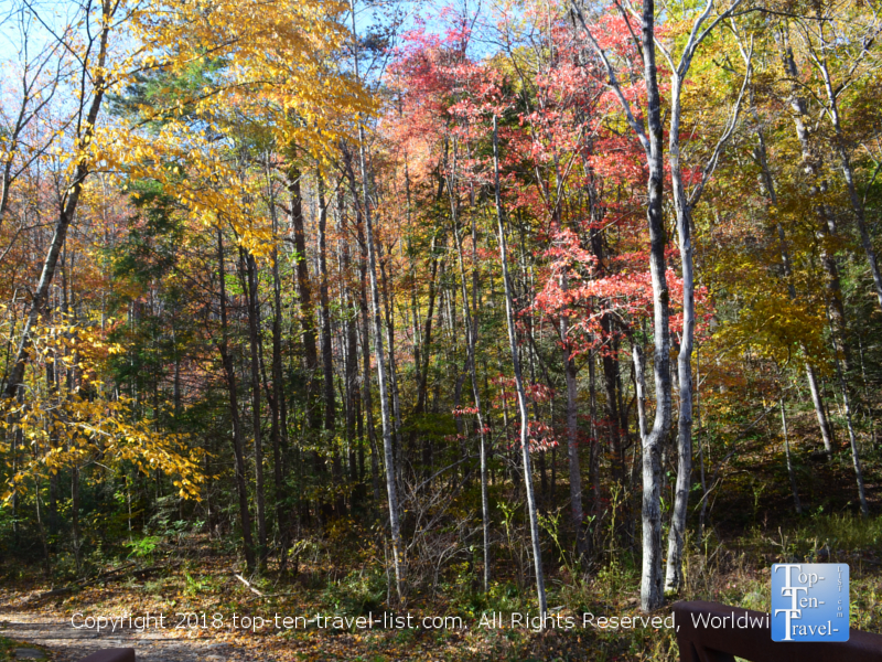 Fall foliage along the Catawba trail in North Carolina