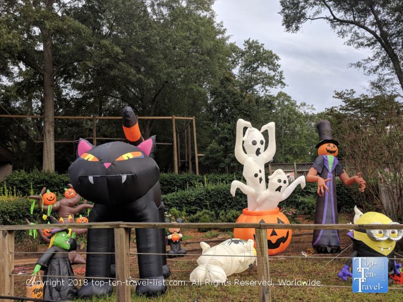 Boo at the Zoo - Greenville, South Carolina
