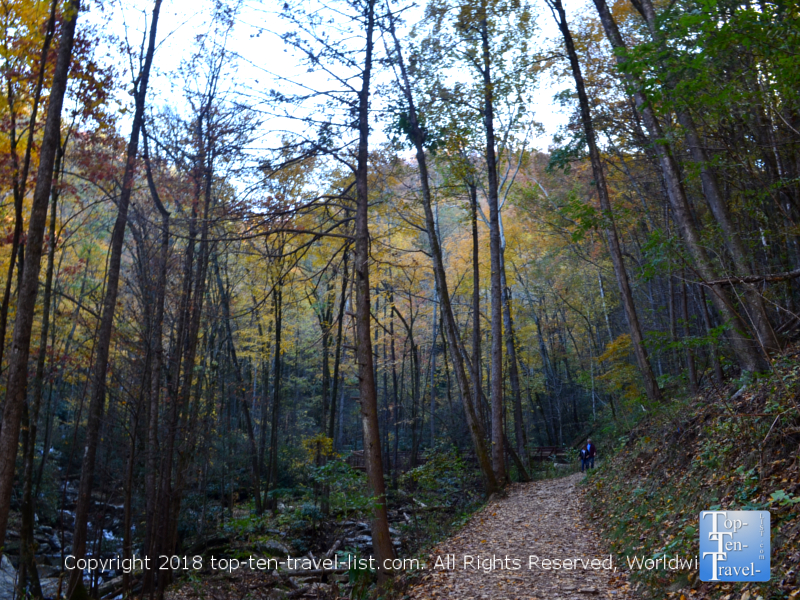 Leaves covering the Catawba falls trail early November in North Carolina