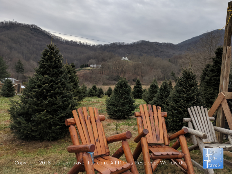 Smoky Mountain Christmas tree farm in Waynesville, NC