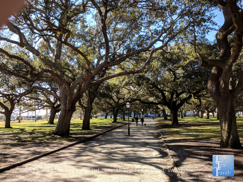Serene tree-lined path near the Charleston waterfront