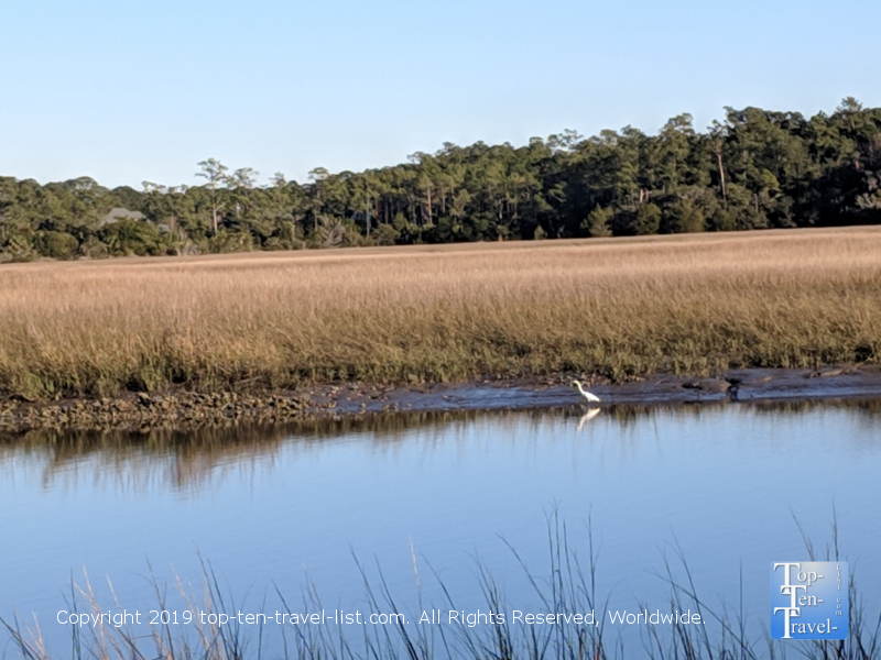 Bird watching at Mt. Pleasant County Park in South Carolina