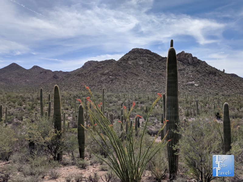 Gorgeous scenery along the Valley View trail at Saguaro National Park in Tucson, Arizona
