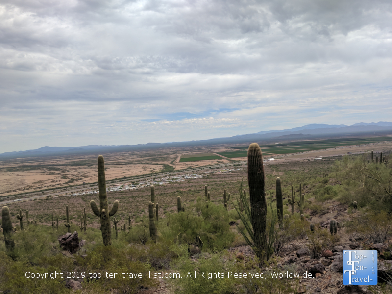 Beautiful overlook of the cacti at Picacho Peak State Park in Arizona