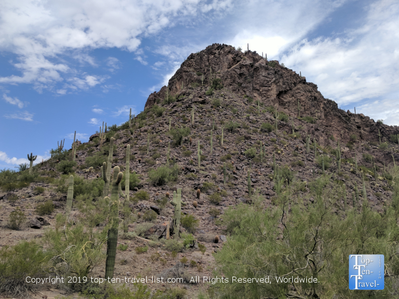 Cacti studded landscapes at Picacho Peak State Park in Arizona