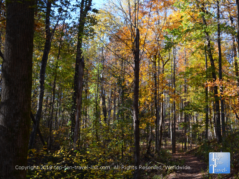 Fall foliage along the Carrick Creek nature trail