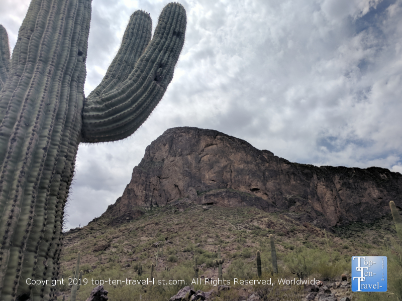 Giant Saguaro at Picacho Peak State Park in Arizona