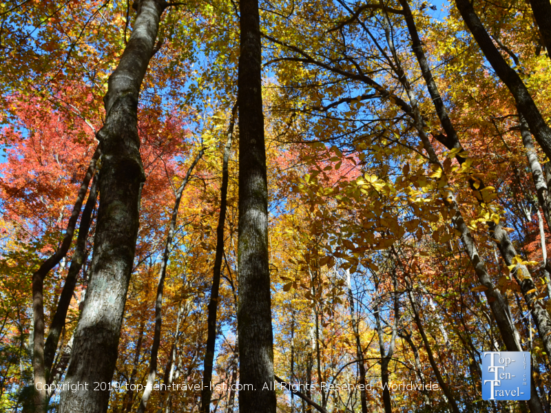 Gorgeous fall foliage at Caesars Head State Park in Upstate SC