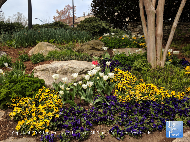 Spring flowers in downtown Greenville, South Carolina